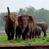 India: Herd of elephants invaded a stadium