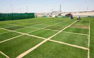 Qatar 2022: Perfect turf for the World Cup already growing