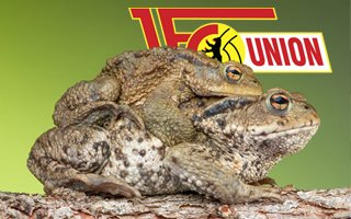 Berlin: Thousands of toads descend on Union stadium